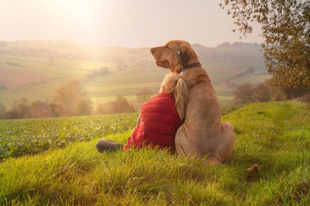 Broholmer Hund mit seinem Frauchen auf einer Weise blicken ins Tal in Deggendorf